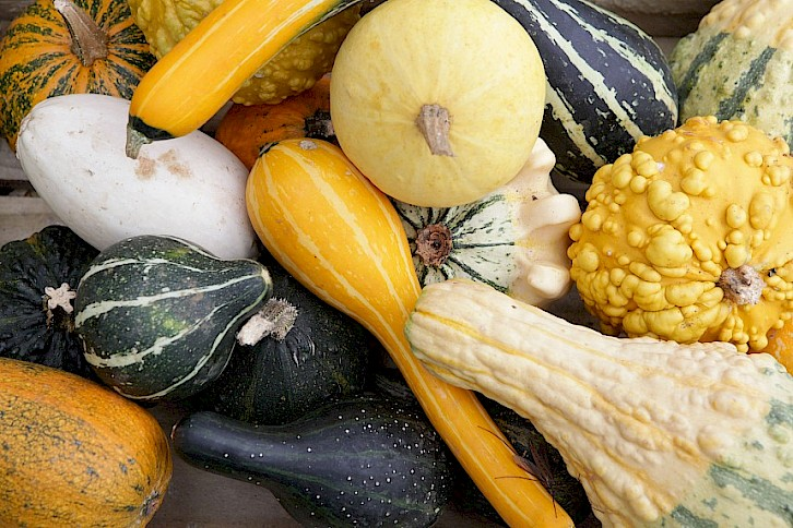 20 Giant Vegetable Facts from Malvern Autumn Show