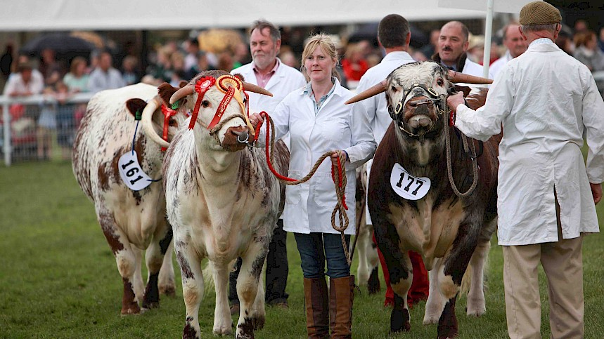 Herds Head For Royal Three Counties Show 2016