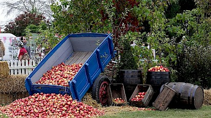 In 'Cider' Scoop! 10 Cider Facts That'll Whet the Appetite